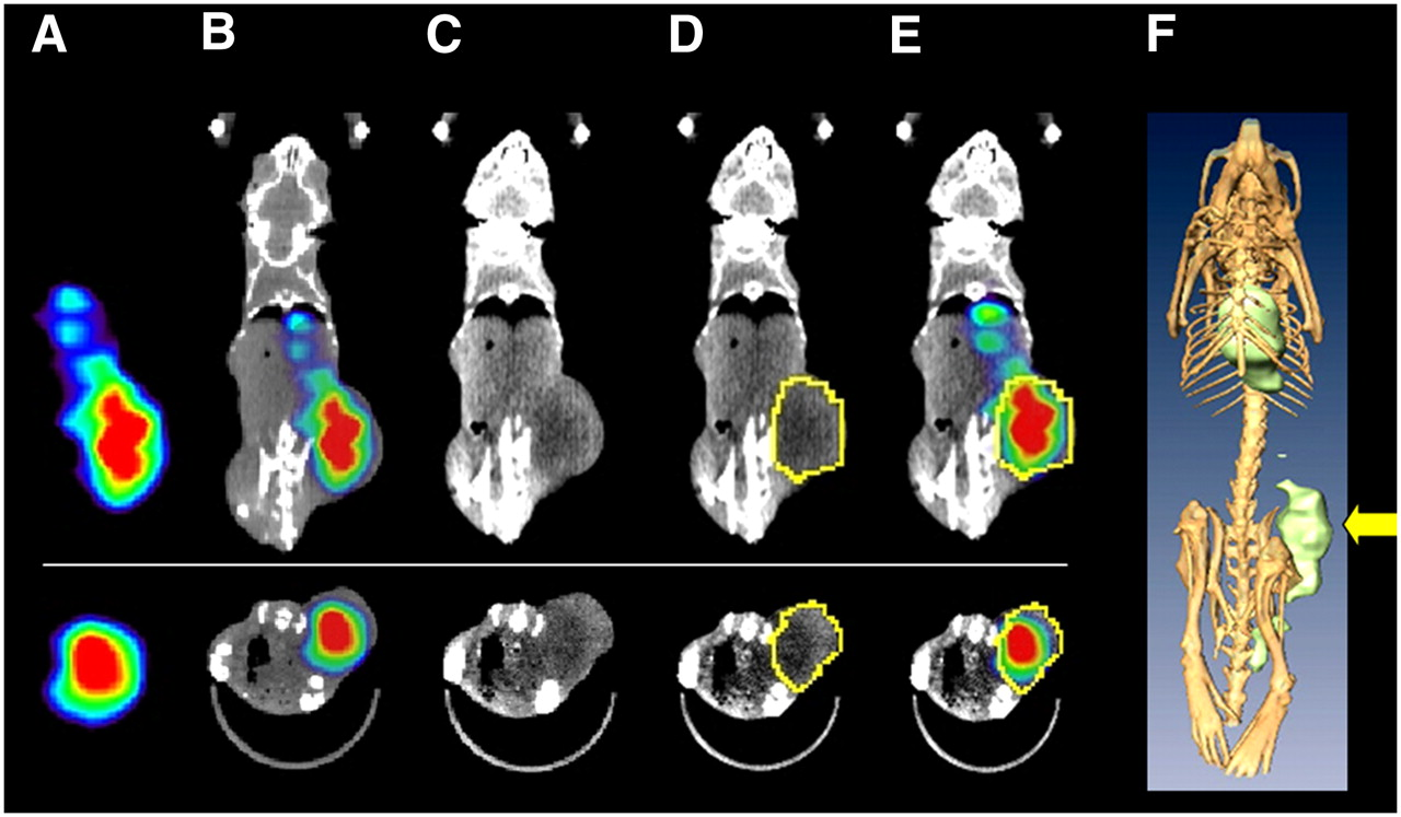 Small Animal Spect And Spect Ct Important Tools For Preclinical Investigation