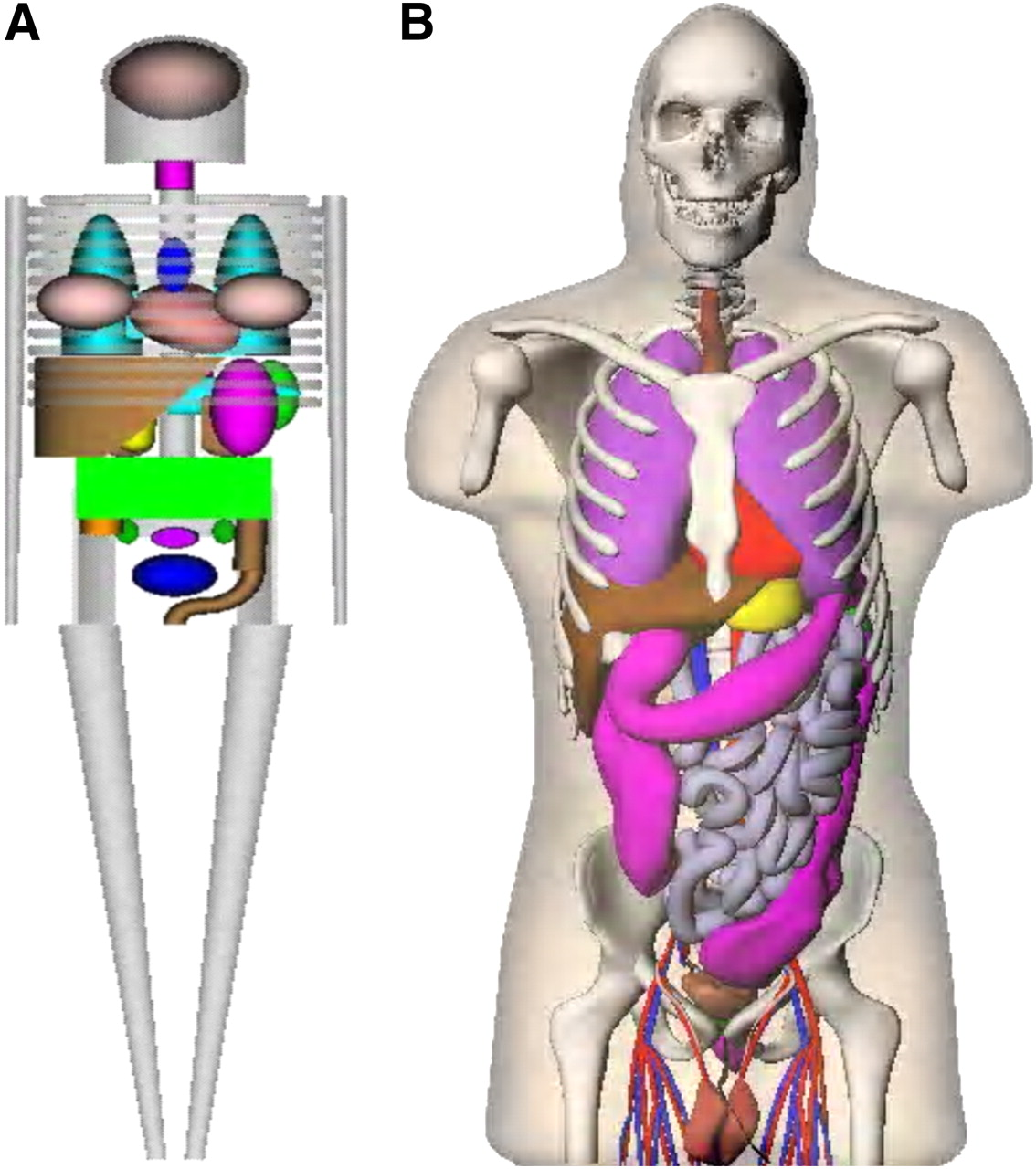 Changes in Radiation Dose with Variations in Human Anatomy: Larger ...