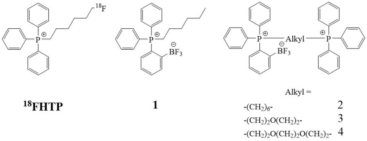 o-bf3-phosphonium pincer moieties in the design of delocalized lipophilic  cation based tracers for pet imaging of mitochondrial function