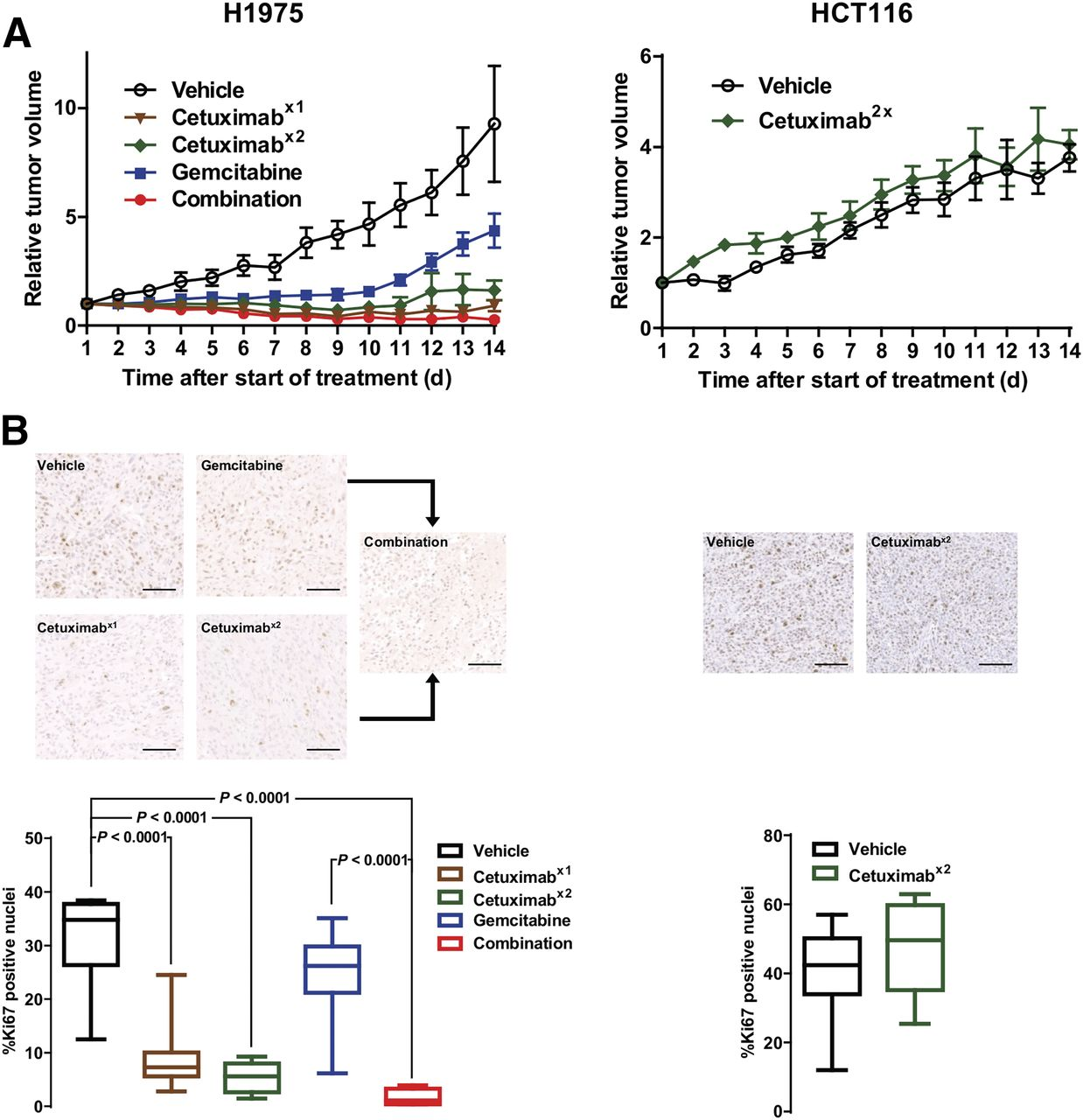 Depicting Changes in Tumor Biology in Response to Cetuximab