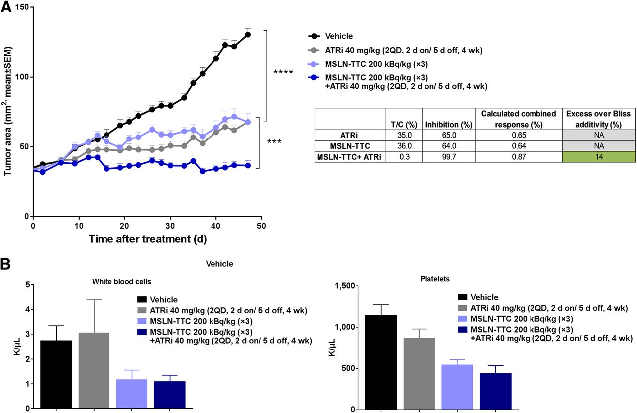 Synergistic Effect Of A Mesothelin Targeted 227th Conjugate In Combination With Dna Damage Response Inhibitors In Ovarian Cancer Xenograft Models