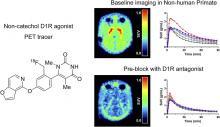 Dopamine D<sub>1</sub> Receptor Agonist PET Tracer Development: Assessment in Nonhuman Primates