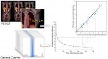 Measurement of PET Quantitative Bias In Vivo
